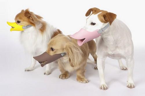 Cachorros usando Gimmick